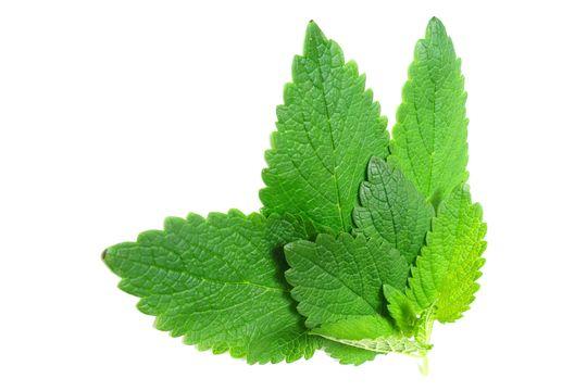 天然美肌植物 解決11大肌膚問題