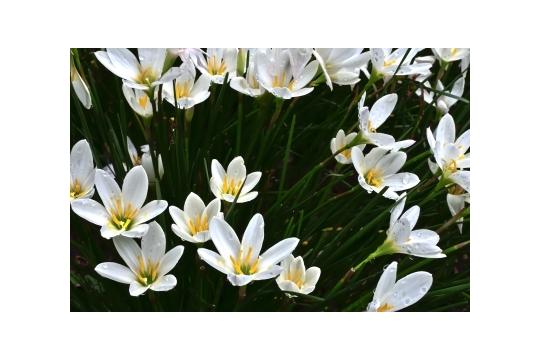 品嚐宮廷宴 慈禧太后最愛的5種花