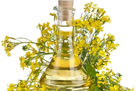 健康食油不健康?芥花籽油傷肺?