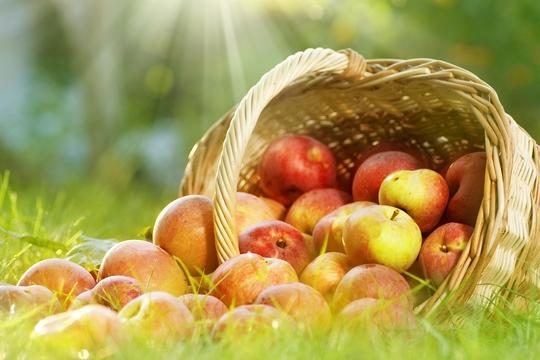 前列腺由「青檸」變「蘋果」?  小心尿瀦流!