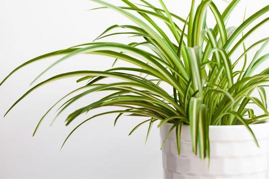 家中一點「綠」  妙用盆栽5大功能