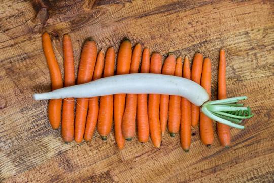 攝取5種營養素 減重燃脂更快速