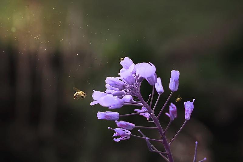 消委會調查:13款蜂蜜含抗生素或除害劑