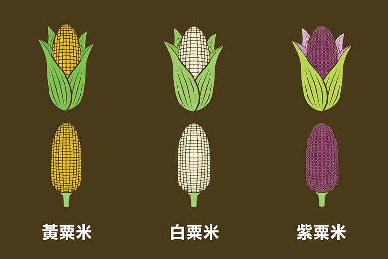 哪種顏色的粟米最有營養?營養師解構粟米減肥之謎