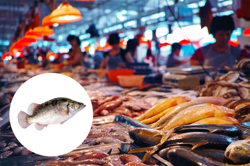 【拆解致癌風險】5個內地食魚樣本含孔雀石綠 桂花魚最「毒」!