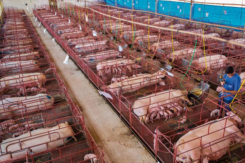 美國植物豬柳漢堡登陸香港 推動保護⼤自然及可持續發展