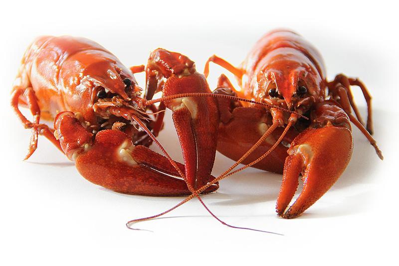 【橫紋肌溶解症】2人進食6斤小龍蝦後感不適 全身痠痛無法站立