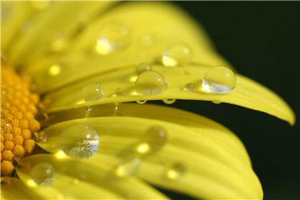 雨水栽種 7大防流感菜蔬