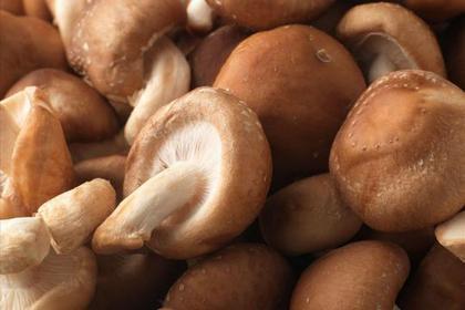 防HPV、濕疣、子宮頸癌…吃菇吧!