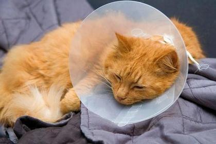 貓狗不舒服  主人要知道! 洞悉10大常見疾病