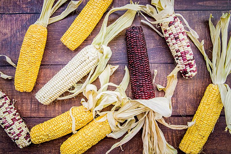 粟米不同顏色各具好處 可代替米飯作減肥主食?