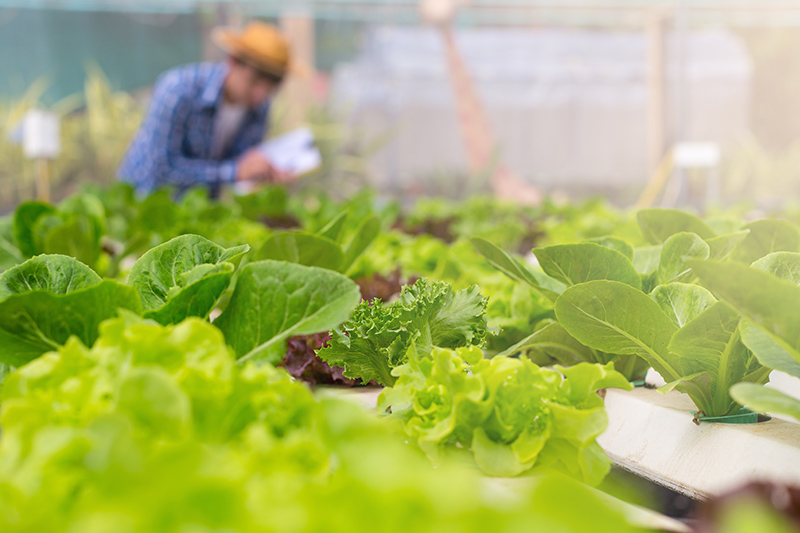 【真假有機?】7成蔬菜含殘餘農藥 兩款菜心含超標除害劑