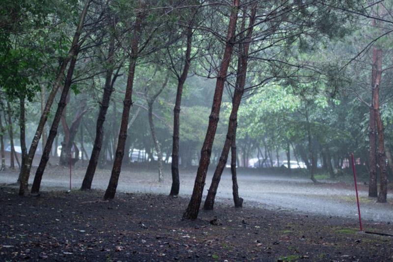 【芒種食譜】梅雨天易睏倦濕疹發作 中醫教煲祛濕湯水