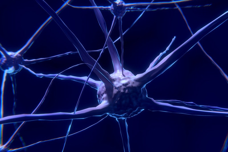 港大研究:發現神經發育中調節蛋白穩態新機制 助了解神經發育疾病