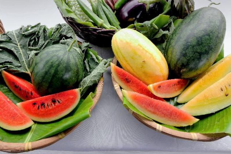 有機西瓜節漁護署展三大特色品種 中醫:西瓜煮水喝能預防中暑