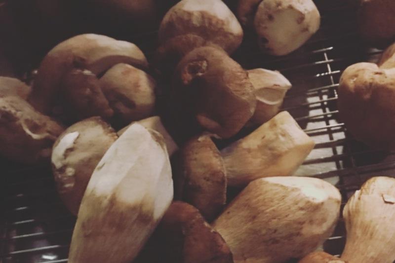 【食菇中毒特徵】好棧精選牛肝菌摻毒菇 食安中心籲市民停止食用