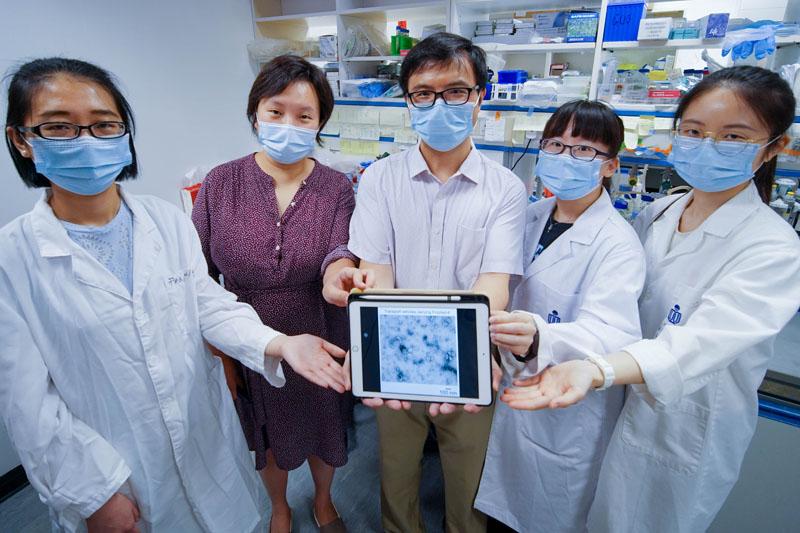 【癌症治療】科大新研究助開拓抗癌藥物