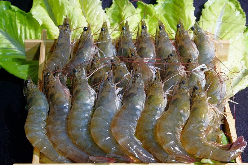 【食肉菌手指】男子洗蝦被刺傷染食肉菌需截指保命