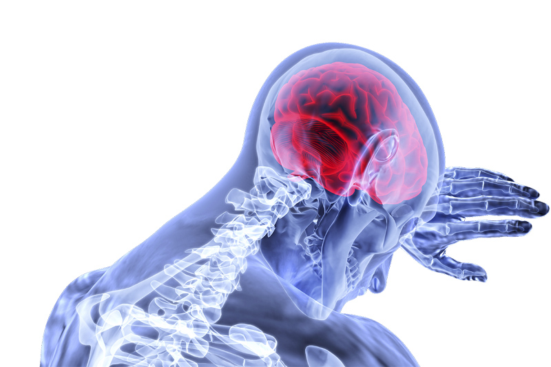 【腦癌治療】科大研究膠質瘤病患的化學抗性機制 助辨認有抗藥性的腦癌病人